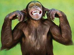 Čínský horoskop: Opice