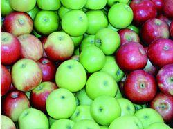 Recept: Hraběnčiny jablečné řezy