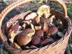 Recept: Bramboračka s houbami