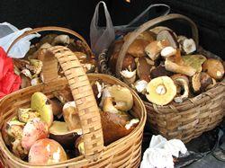Recept: Nakládané houby