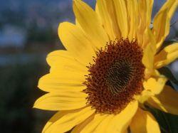 Květina … tichý kamarád