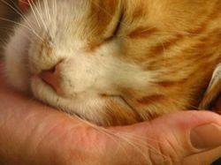 Bajka o kočičce a ocásku