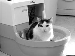 """""""Trůn"""" pro kočičí výsost"""