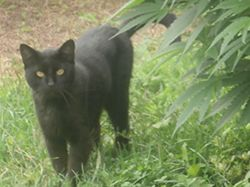 Čteme horoskopy, klepeme na dřevo, ale černých koček se nebojíme