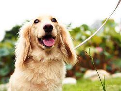 Veterin��i varuj�: Lidsk� j�dlo ps�m �kod�