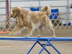 Jak správně vycvičit psa