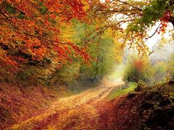 Podzimní péče o vlasy ve třech krocích