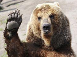 Nafackuju medvědovi?