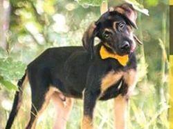Žlutě značený pes potřebuje prostor