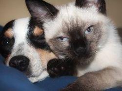 Odborník na na výživu psů a koček odpovídá na časté dotazy
