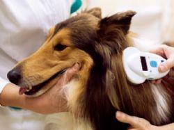 Kdo a kam má registrovat očipované psy