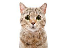 Kočka v domácnosti? Sepsali jsme pro vás pět věcí, které nutně potřebujete