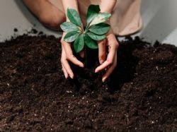 Kam s bioodpadem? 3 pravidla kompostování