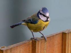 Ptačí budko, kdo v tobě přebývá aneb nezapomínejme na dřívější tradice, mají smysl
